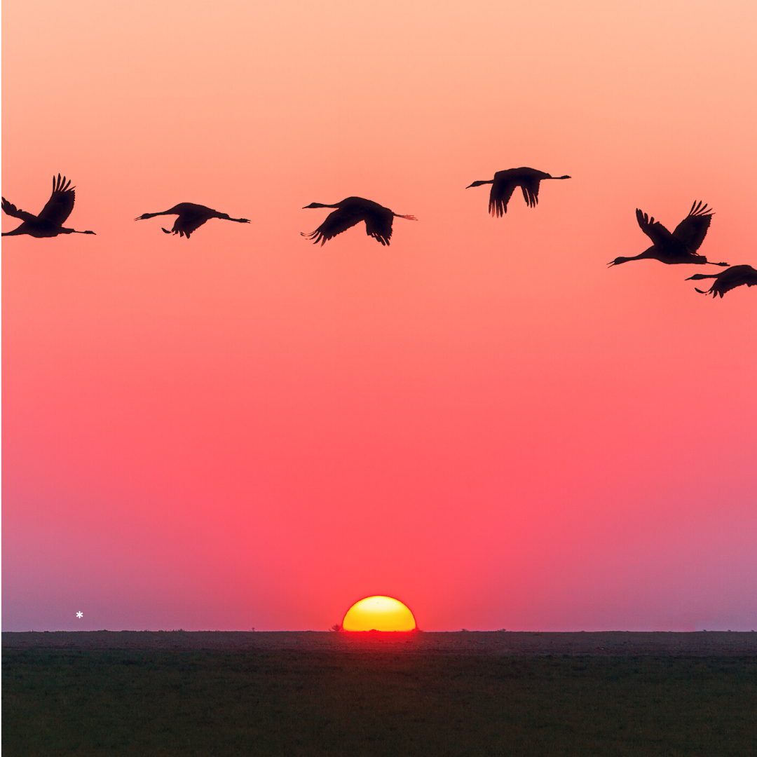 Day 20 pic of birds over sunset