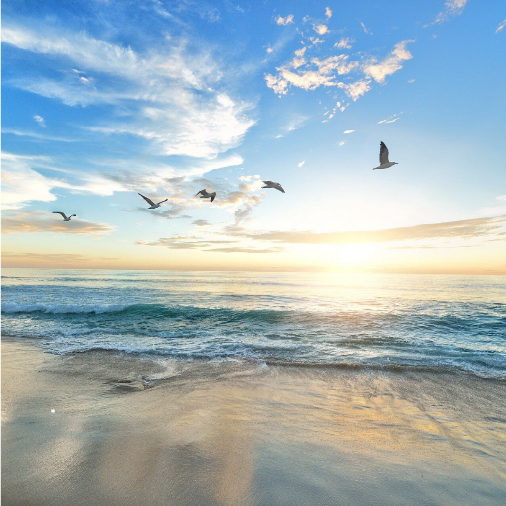 day31 pic of birds flying over the ocean