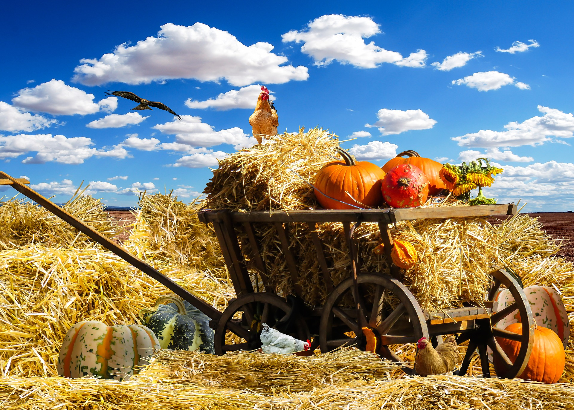 Pumpkin Panic picture, pumpkins in a cart with hay