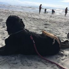 Picture of Duncan at the beach with lizard and Stasia
